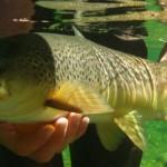 pêche à la truite en Nouvelle Zélande