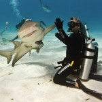 High Five le Requin !