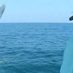 Un barracuda de 18 kilos saute dans le bateau