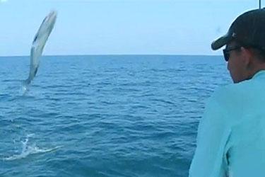 barracuda saute dans le bateau