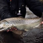 brown trout catch and release