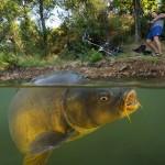 pêche de la carpe