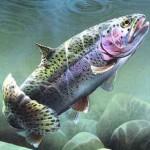 Fermeture de la pêche 2014