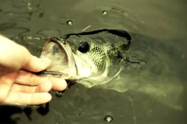 prendre le poisson par la gueule