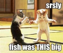 lolcat pêche poisson