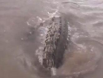 peche crocodile