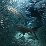 Les iles Cayman, un paradis pour la plongée