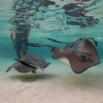 Nager avec les raies