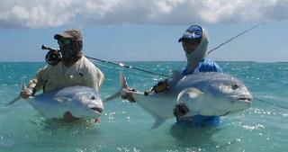 pêche grosse carangue
