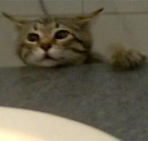 chaton chute