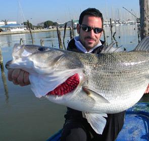 bar record 11 kilos