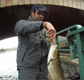 poisson pêché sous un pont