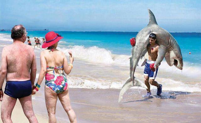 shark KO on a beach
