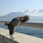 Le chat qui regarde la mer