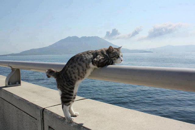 chat regarde la mer
