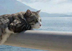 cat watching sea