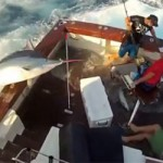 600 pound marlin jumps in boat