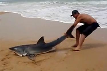 pour remettre un requin à l'eau il le tire par la queue