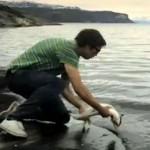 Libérez le saumon !