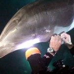 Sauvetage de dauphin