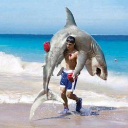 boxing with shark