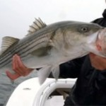 Northeastern USA Surf & Inshore Fishing