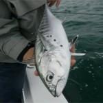 Une année de pêche en mer