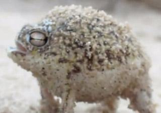 grenouille mignonne
