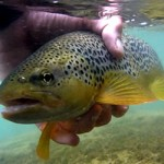 Fly fishing in the Pyrenees