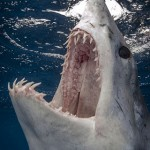 Photos de requins