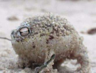 grenouille cie comme jouet pour bébé