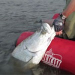 Un super film sur le tarpon  la mouche