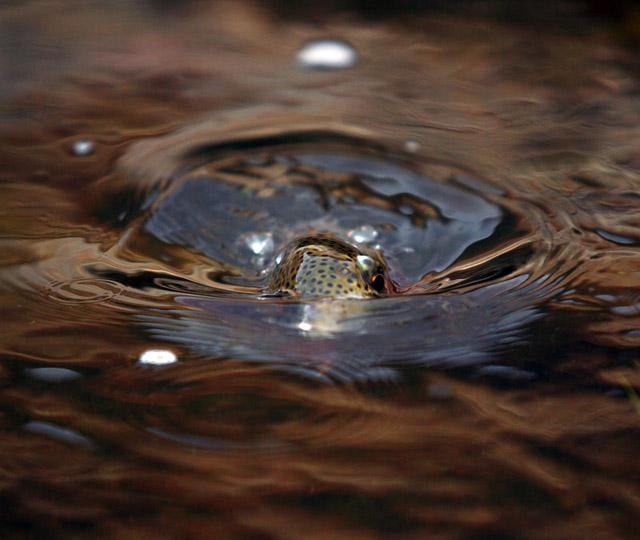 truite hors eau