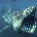 Shark's joke