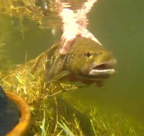 ouverture pêche Dordogne