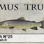 Culture Fish 25