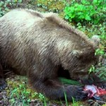 Pêche en Alaska – Episode 1