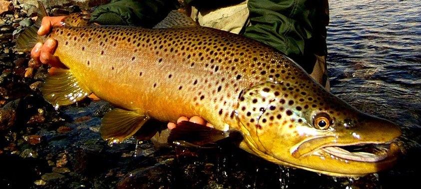 la pêche en rivière