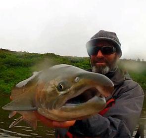Alaska saumon pacifique