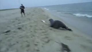 seal steals fish