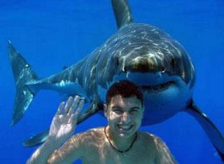 shark kidding