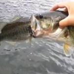 Greedy Bass Rescue