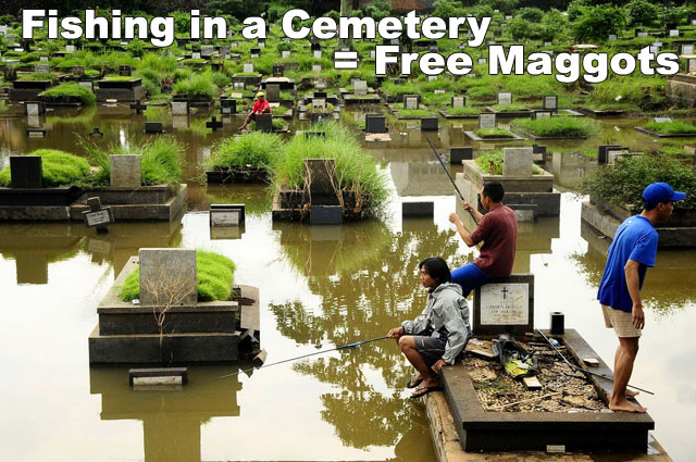 fishing cemetery, free maggots