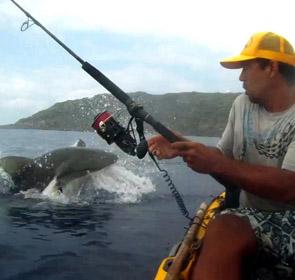 un requin attaque un pêcheur en kayak