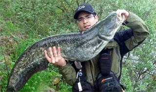 silure 1m15 pêche leurre