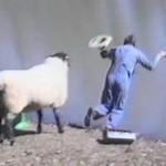 Mouton attaque Pêcheur