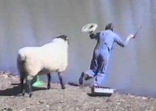 mouton pêcheur