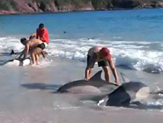 baigneurs sauvent dauphins