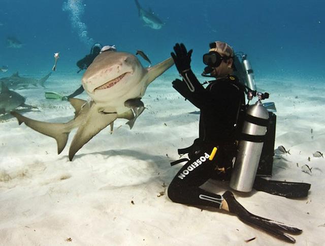Shark High Five