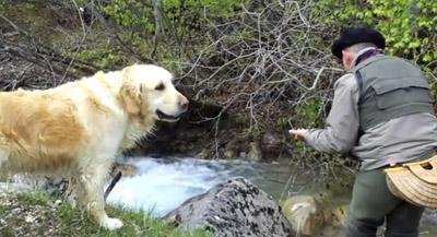 chien de pêche